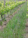 Fromm cover crop for Express.jpg