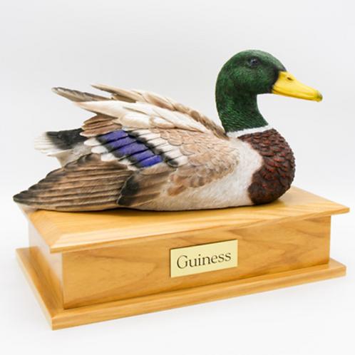 Male Duck - 1732
