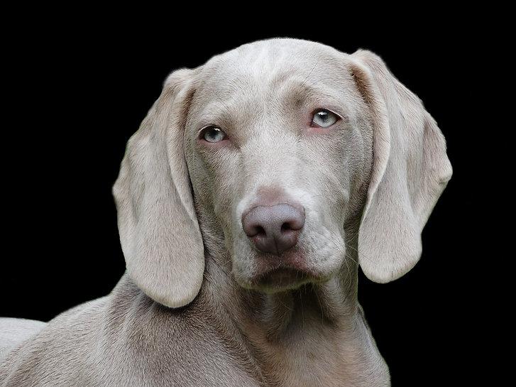dog-1742295_1280.jpg