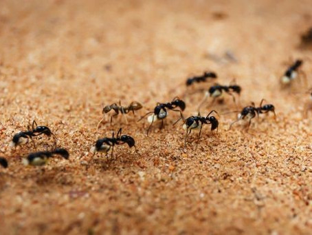 4 Effective Tips To Reduce Ant Problems