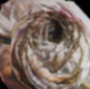 Original Art. Oil on canvas. Ranunculus.