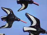 A Squadron of Oystercatchers. A Set of 3 Ceramic Wall Plaques.