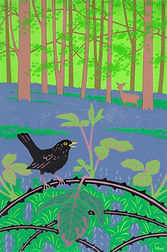 ART. ART. Blackbird, bramble, bluebells