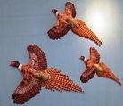 BIRDS. A Bouquet of Pheasants.