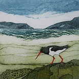 ART Oyster catcher