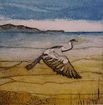 Heron. Collagraph