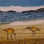 ART Curlews