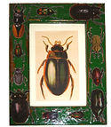 Decoupage Beetle picture frame