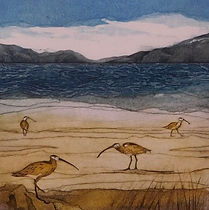Curlews. Collagraph
