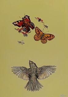 Flutterbies Bird and Butterflies
