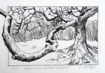 Ashes Hollow, Long Mynd.  Framed Etching