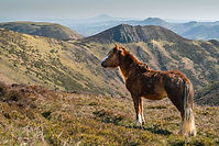 Shropshire Hills lookout.