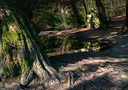 Shropshire Hills. Rectory Wood.