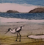Avocet. Collagraph