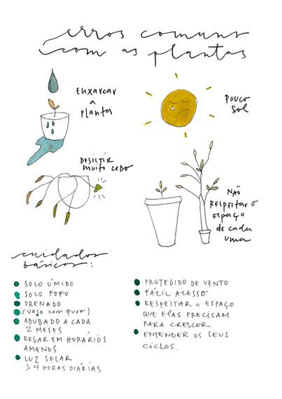 erros comuns com as plantas