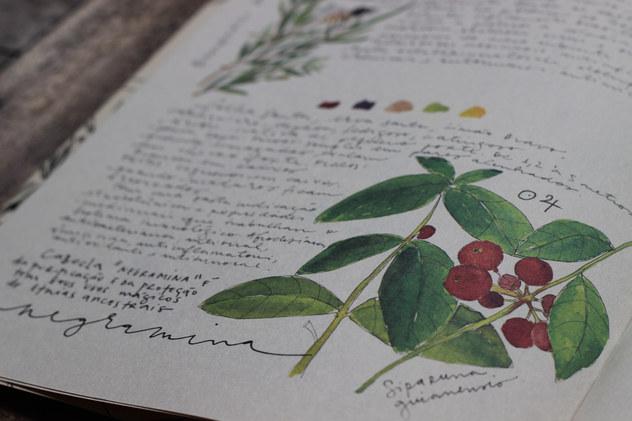 plantas nativas