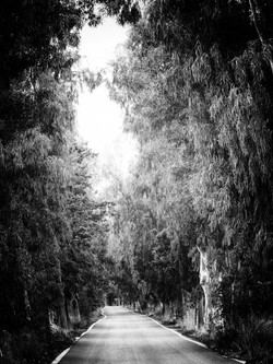 Tree Lined to Fourni
