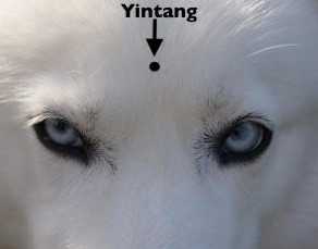 "What's the ""Point""? -Yintang"