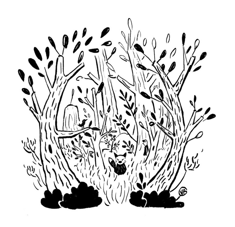 fox-in-the-woods.jpg
