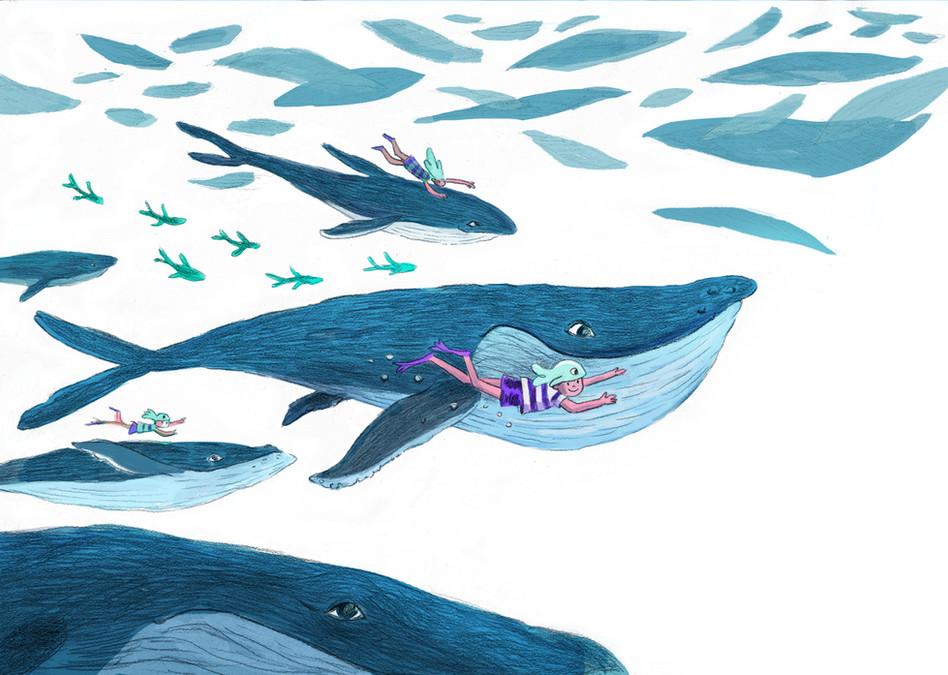 whales illustration