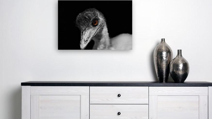 Eddie the Emu.jpg