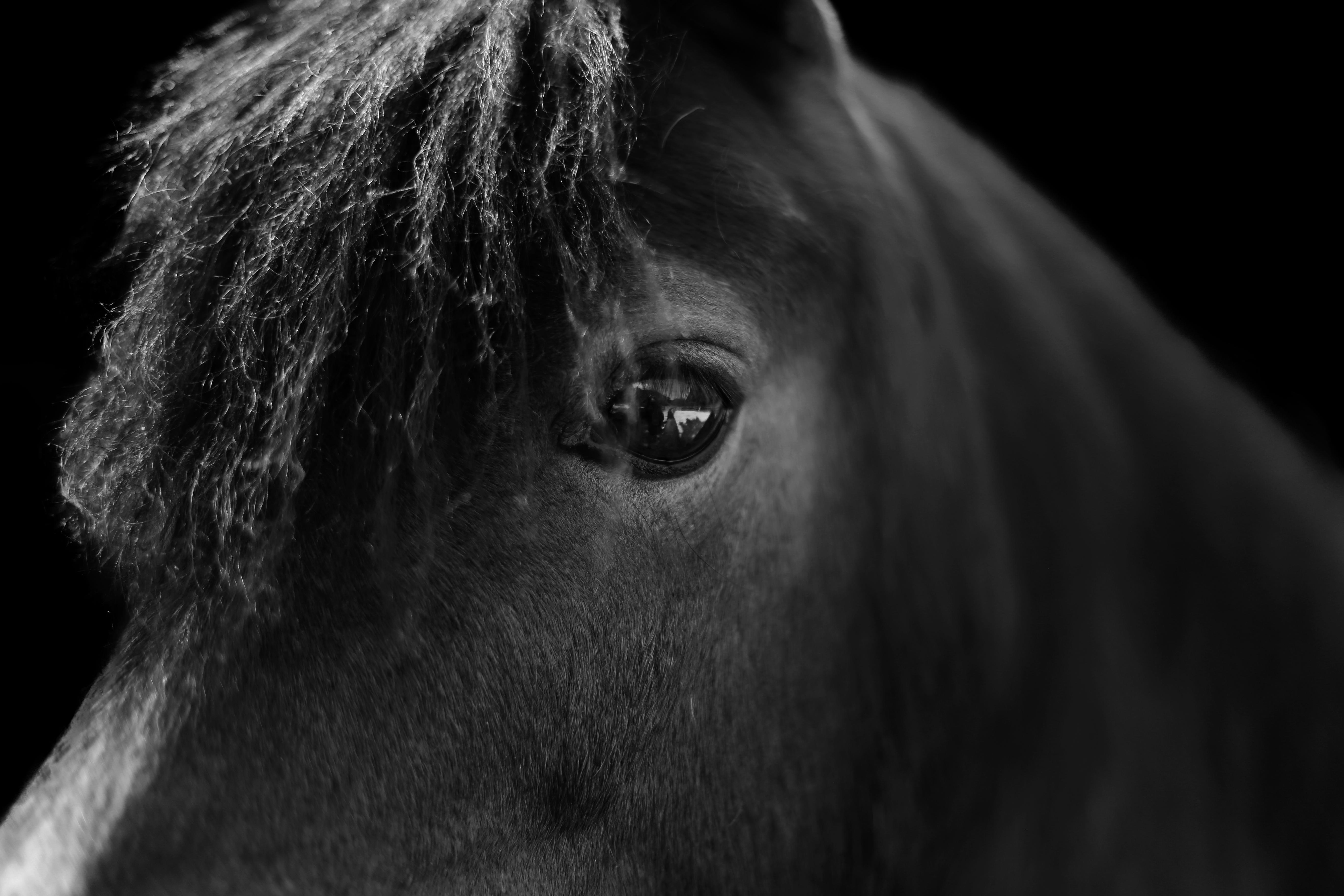 Regal Horse