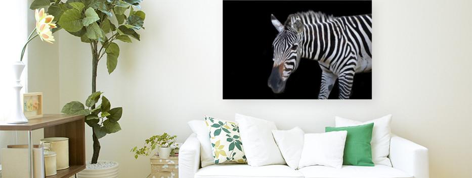 Ziggy the Zebra.jpg