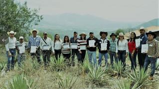 Proyectan aumentar 50% la plantación de maguey mezcalero en Edomex