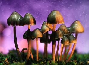 """Compañía británica de """"hongos mágicos"""" comenzará a cotizar en la bolsa de EU"""
