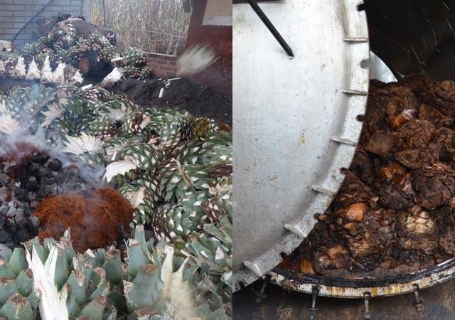 cocción de agave en piedra y en mampostería