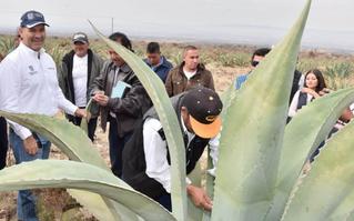 Desconocimiento de mezcal estatal en Aguascalientes