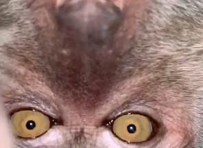 Mono se roba celular, se toma selfies y abandona el aparato