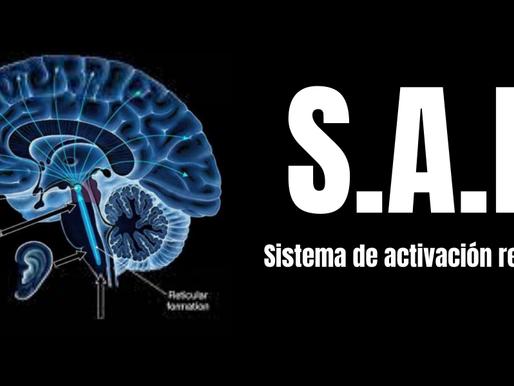 Conoce el sistema de activación reticular en la visualización