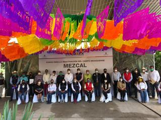 Empresarios solicitan crear una Comisión Reguladora del Mezcal Mexiquense