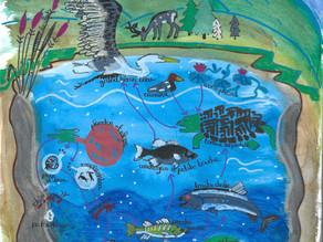 Les lacs, un biome d'eau douce