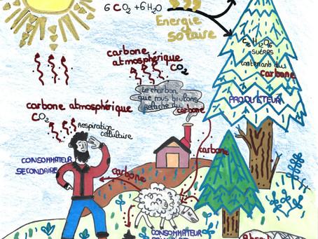 Le cycle du carbone