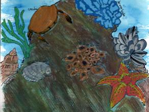Les eaux côtières : un biome en apparence si reposant !