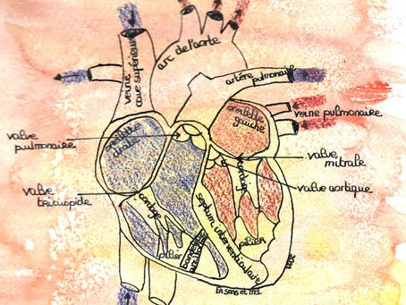 De l'Univers aux organes humains.