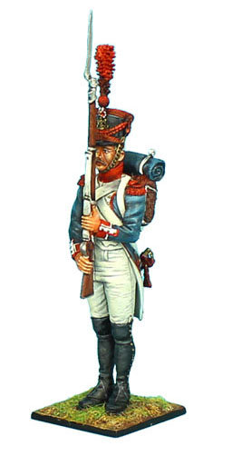 NAP391 - Grenadier of the 7th Line Infantry Standing at Present Arms