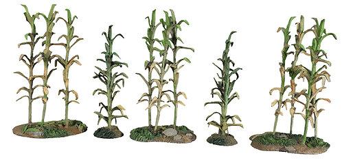 51030 - 18th-19th Century Corn No.2