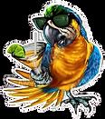 Florida-Paradise-Parrot-Tropical-Margarita-Car-Bumper-Vinyl-removebg-preview_edited.png