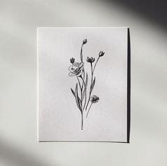Flax Plant