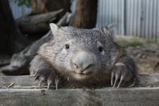 Wombat weather forecast?