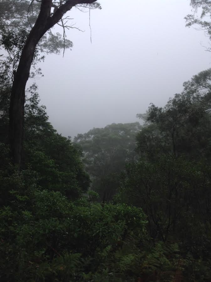 Mist on the valley