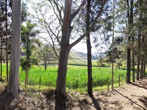 Plantação Marcelo.jpeg