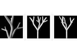 Branching 3.jpg
