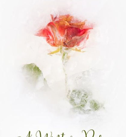 Book Review: A Winter Rose by Amy Craig