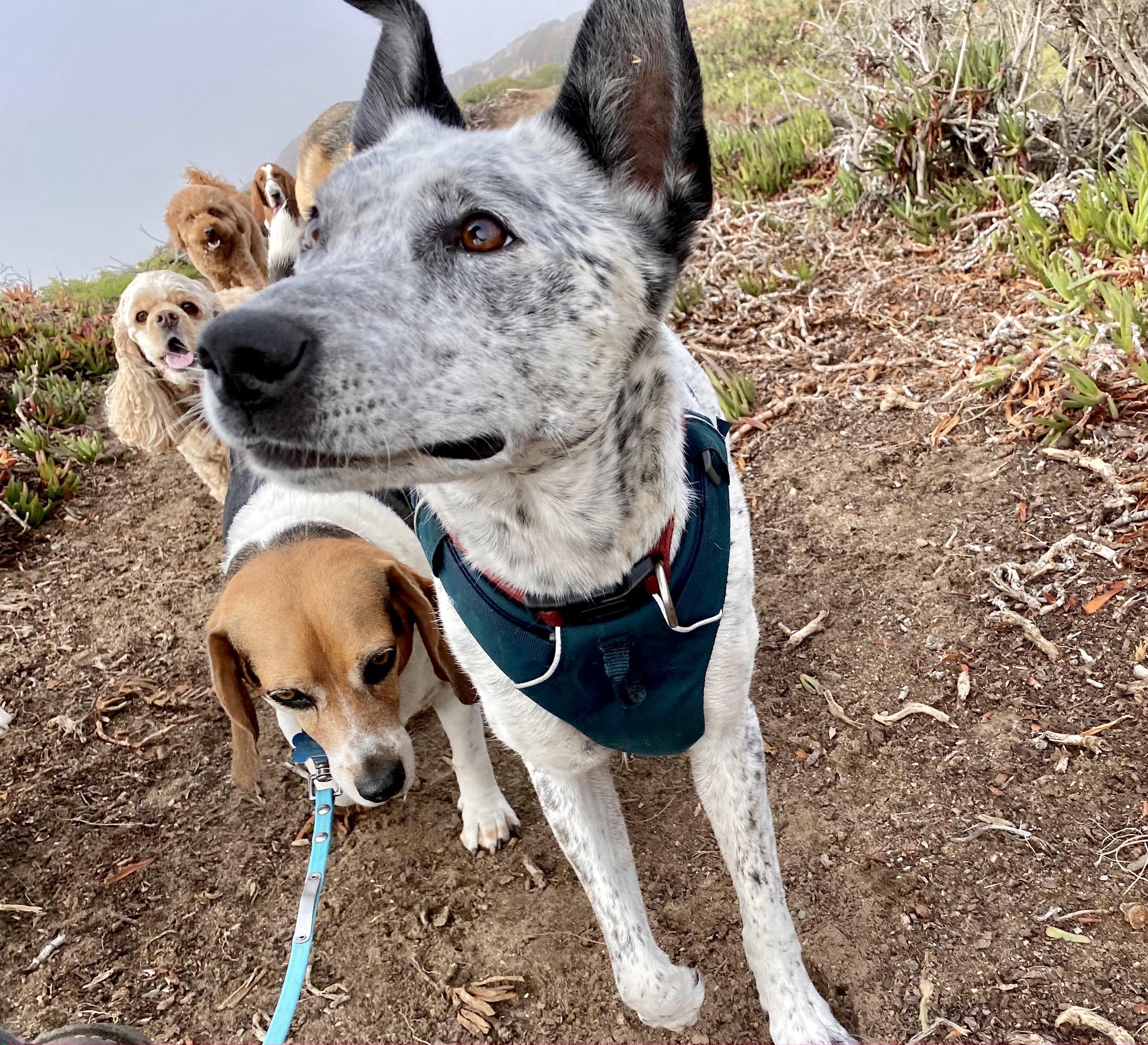 Group of Doggos