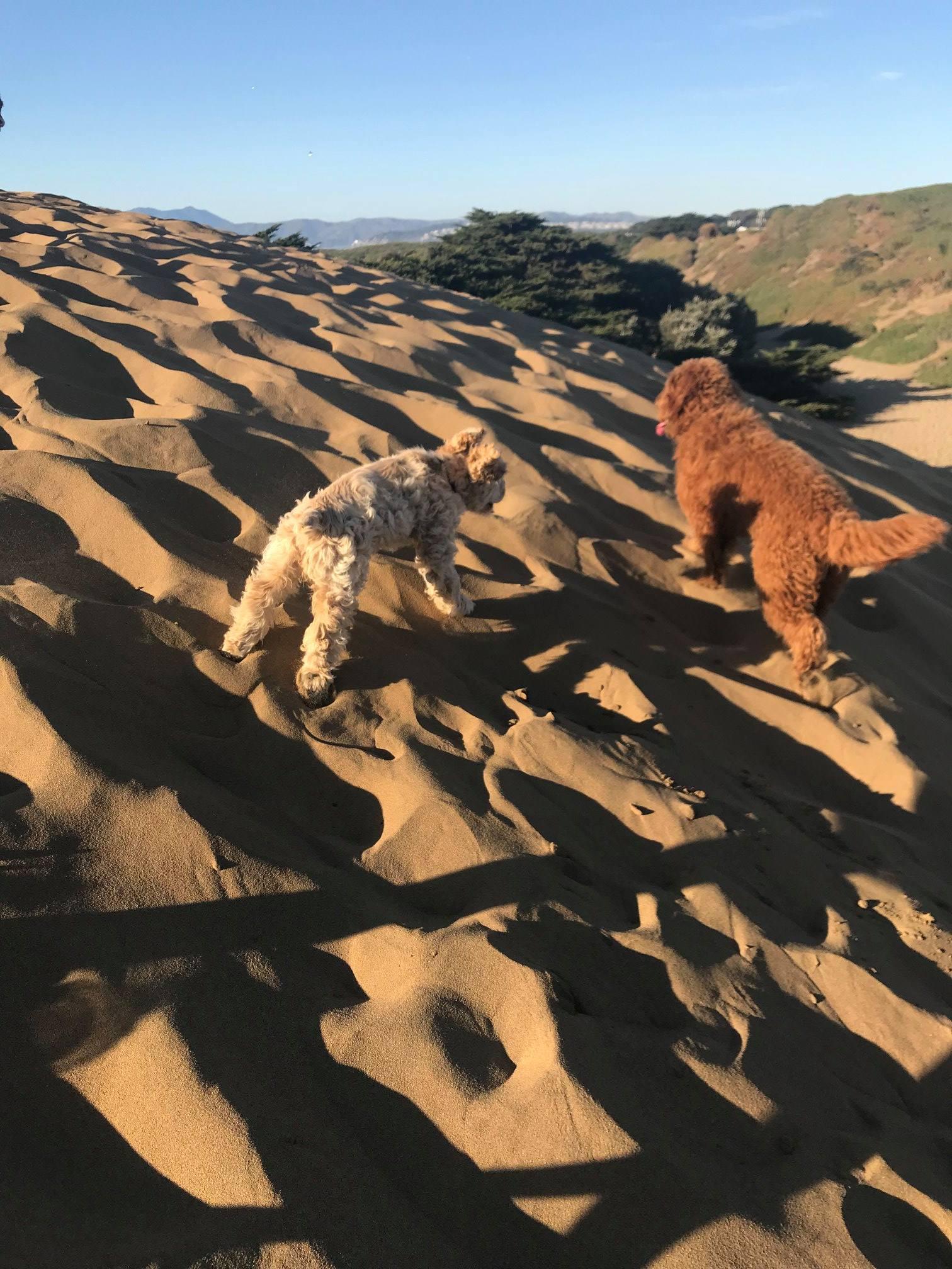 SF Dog Walking