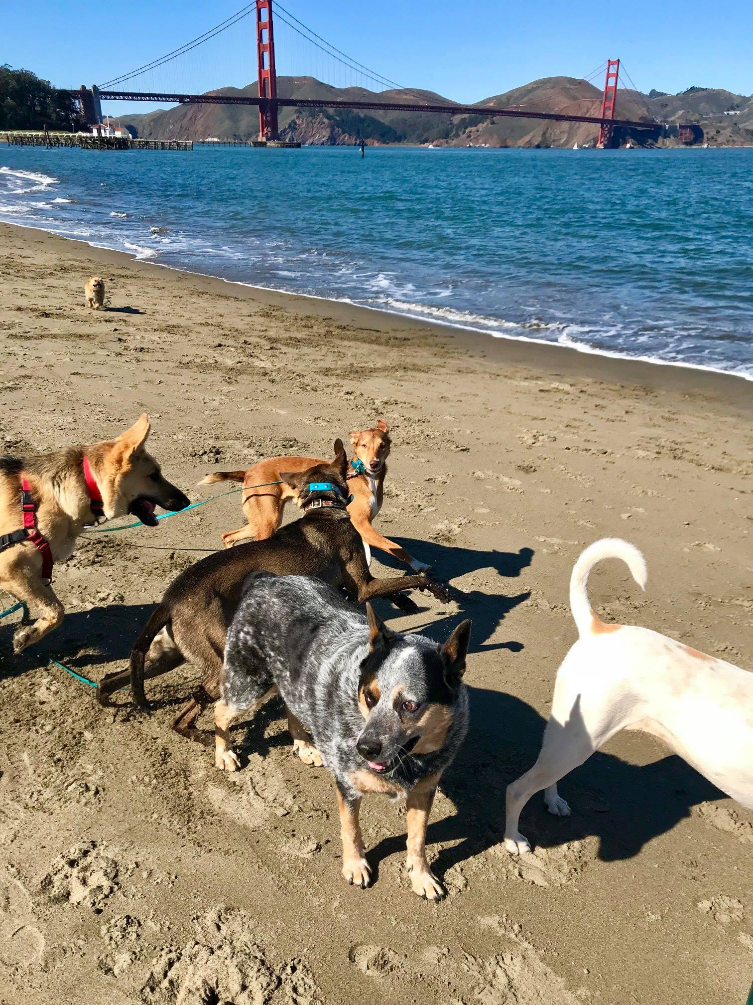 SF Dog Walkig